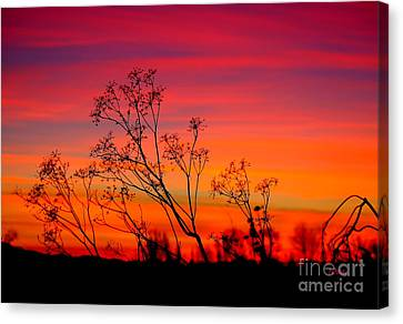 Sunset Silhouette Canvas Print by Patrick Witz