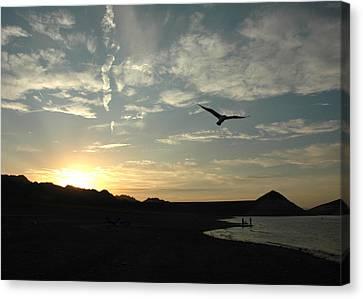 Sunset Soaring Canvas Print by Jonathan Schreiber