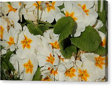 Florals Canvas Print - Sunshine by Aimee L Maher Photography and Art Visit ALMGallerydotcom