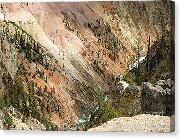 Sunshine On Grand Canyon In Yellowstone Canvas Print by Living Color Photography Lorraine Lynch