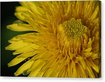 Canvas Print featuring the photograph Sunshine Weed by Peg Toliver