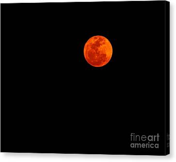 Supermoon 03-19-2011 Canvas Print by Lynda Dawson-Youngclaus