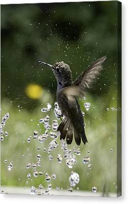 Surfing The Drops Of Water Canvas Print