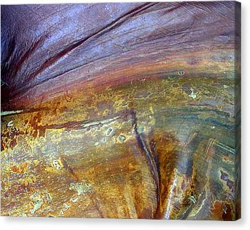 Surprising Beauty In A Palm Frond Canvas Print