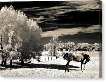 Surreal Infrared Sepia Nature Canvas Print - Surreal Fantasy Horse Landscape by Kathy Fornal