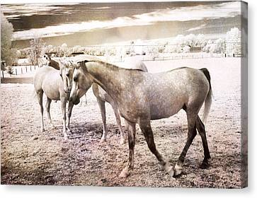 Surreal Infrared Sepia Nature Canvas Print - Surreal Horses Dreamy Infrared Landscape by Kathy Fornal