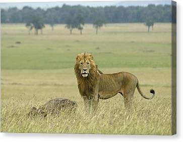 Surveying His Kingdom Canvas Print by Michele Burgess