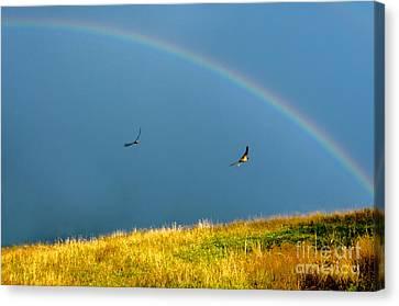 Swallows Under A Rainbow Canvas Print by Thomas R Fletcher