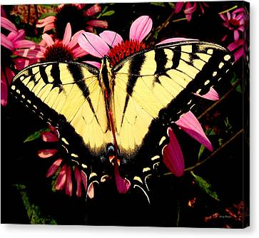 Canvas Print featuring the photograph Swallowtail Butterfly On A Purple Coneflower by George Bostian