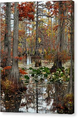 Swamp In Fall Canvas Print by Marty Koch