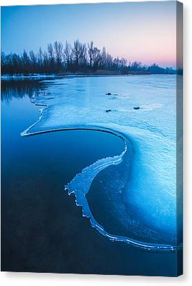 Swan Canvas Print by Davorin Mance