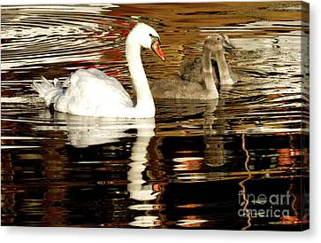 Canvas Print featuring the photograph Swan Family In Evening by Charles Lupica
