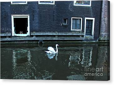 Swan In Amsterdam Canal Canvas Print by Gregory Dyer