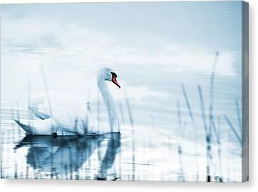 Swans... Canvas Print - Swan by Jaroslaw Grudzinski