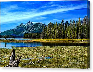 Swan Lake II Canvas Print by Robert Bales