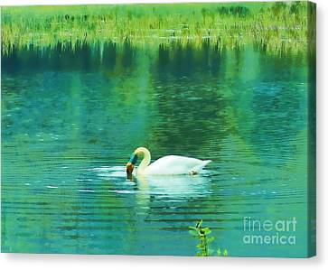 Swan Lake Canvas Print by Judi Bagwell
