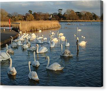 Canvas Print featuring the photograph Swan Lake by Katy Mei
