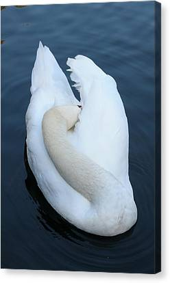 Swan Canvas Print by Luis Esteves