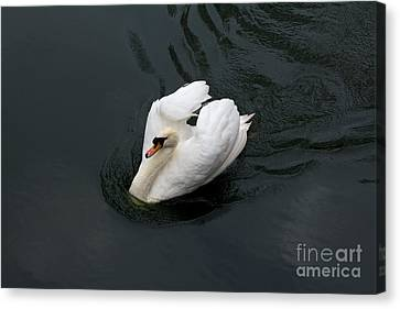 Canvas Print featuring the photograph Swan On Black Water by Les Palenik