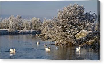 Canvas Print featuring the photograph Swan Patrol by Rob Hemphill