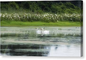 Swan Pond Canvas Print by Bill Cannon