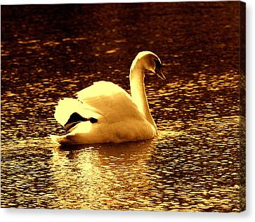 Swan Song 3 Canvas Print by Aron Chervin