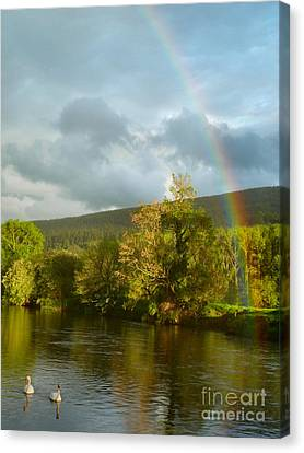 Swans And Double Rainbow 2 Canvas Print