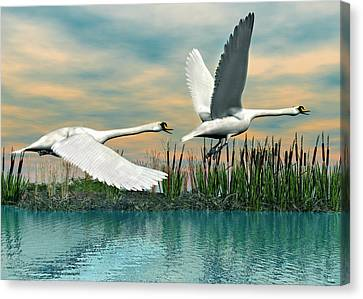 Swans In Flight Canvas Print by Walter Colvin