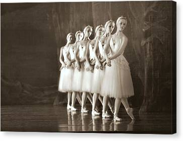 Swans Lined Up Canvas Print by Kenneth Mucke