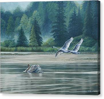 Swans On Carter Lake Canvas Print by Ruth Gee