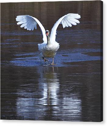 Canvas Print featuring the photograph Swans On Ice 2 by Brian Stevens