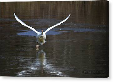 Canvas Print featuring the photograph Swans On Ice by Brian Stevens
