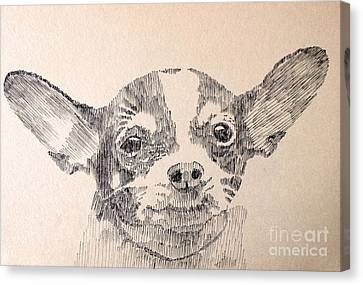 Sweet Chi Canvas Print by Robbi  Musser