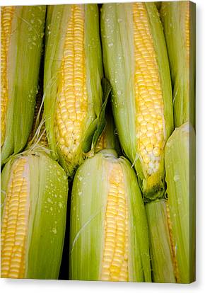 Sweet Corn Canvas Print by Jen Morrison