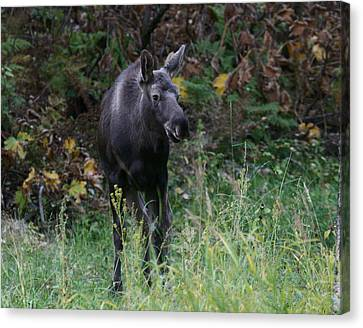 Canvas Print featuring the photograph Sweet Face by Doug Lloyd