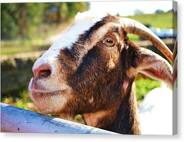 Canvas Print featuring the photograph Sweet Goat by Mary Zeman