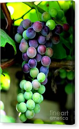 Sweet Grapes Canvas Print by Carol Groenen