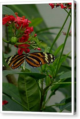 Canvas Print featuring the photograph Sweet Nectar by Frank Wickham