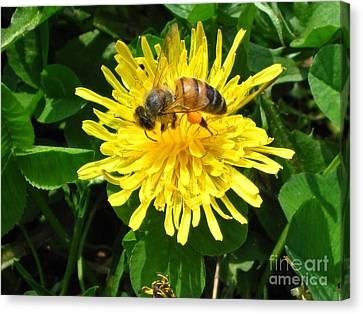 Sweet Nectar Canvas Print by The Kepharts