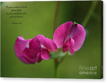 Sweet Pea Flower Canvas Print by Tyra  OBryant