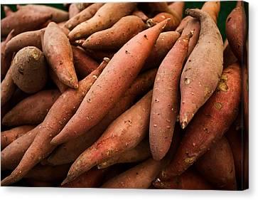 Sweet Potatoes Canvas Print by Tanya Harrison