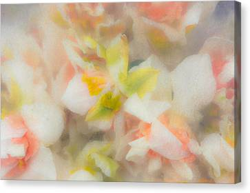 Sweet Push Canvas Print by Lynn Wohlers