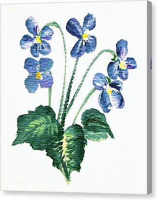 Sweet Violets Canvas Print by Leea Baltes