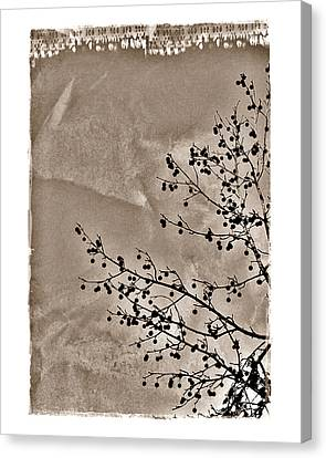 Sweetgum Sepia Canvas Print by Judi Bagwell