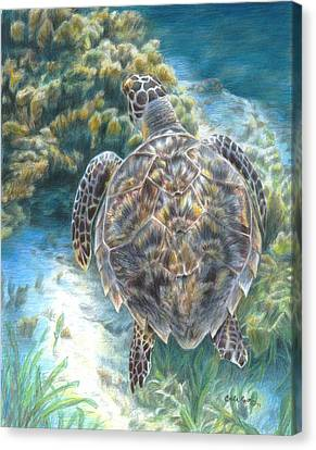 Swimming Turtle Canvas Print