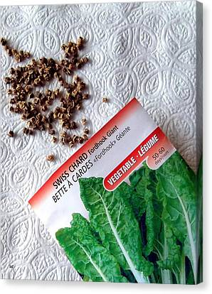 Swiss Chard Seeds Canvas Print by Will Borden