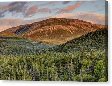 Ancient Boreal Mountain And Forest Canvas Print by Scott Leslie