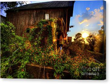 Tactor Overgrown With Flowers And Weeds At Sunset Canvas Print by Dan Friend