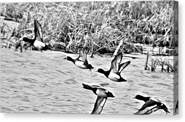 Canvas Print featuring the photograph Take Flight No. 2 In Black And White by Janice Adomeit