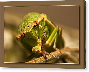 Canvas Print featuring the digital art Take My Pic 01 by Kevin Chippindall